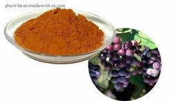 Estratto della pelle dell'uva dell'estratto della pianta/estratto seme dell'uva