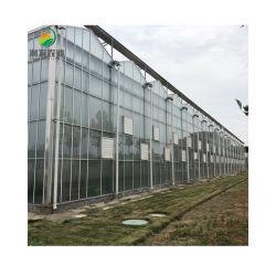 المصنع العرض التجاري تعويم الزجاج الزراعي تلطف الخضراء البيت الدفيئة