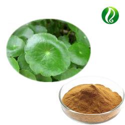 Organic Gotu Kola extrait de fines herbes