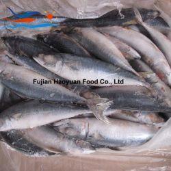 De bevroren Gehele Ronde Vreedzame Makreel van Vissen