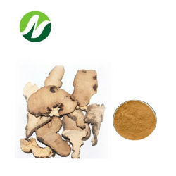 Goede kwaliteit Polysaccharides10%-50%Polyporus Umbellatus Extract