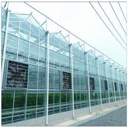 مصنع الصين Hydroponic النظام الري المعدات لفائف الصلب زجاج الإطار دفيئات للزراعة من الكروم بالثقافة الفراولة