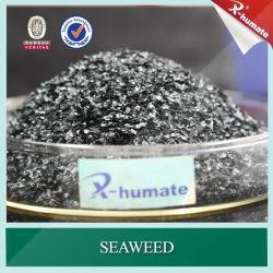 100% de extracto de algas marinhas solúvel em água usada para o crescimento da planta Agent