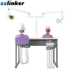 Modelli dentali di simulazione di formazione Lk-OS14 per addestramento dell'università