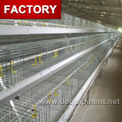 Fábrica Nova automáticos utilizados directa de aves de gaiola de camada de frango para o Bangladesh