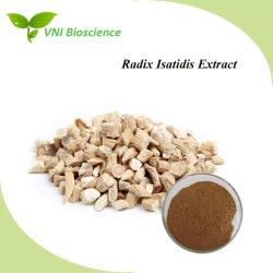 ISO SGS Certified Indirubin /Radix Isatidis Extraia/Isatis extrato de raiz/Indigowoad extrato de raiz