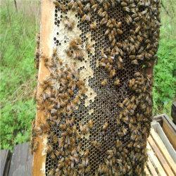 자연적인 꿀 꿀벌 제품 벌집 둥지 꿀