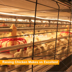 Venda a quente Avícola Alimentador Automático para a camada frangos de corte