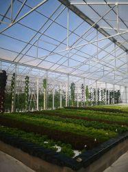 Serra di vetro del film di materia plastica del policarbonato di /PC/ di luce solare intelligente agricola con il vetro di piatto di luce solare degli accessori della struttura