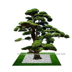 Albero di pino artificiale di ultimo disegno