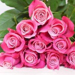 La Chine Hot Vente de fleurs coupées fraîches Rose Rouge pour mariage, don et la décoration