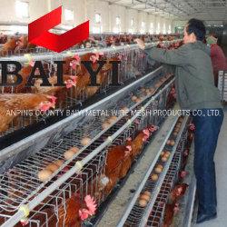 L'allevamento della gallina automatica del pollame del sistema di innaffiatura dei 120 uccelli mette in gabbia la gabbia del pollo della batteria