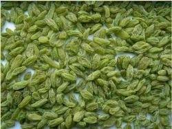 Groene Rozijn