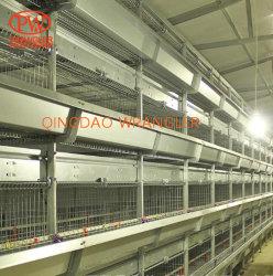 Il pollame poco costoso si è liberato di Brolier usato popolare che coltiva la gabbia
