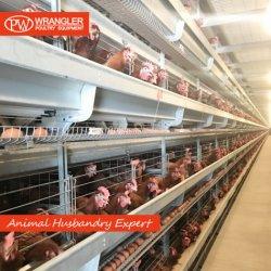 Las aves de corral de la capa de pollo de la jaula de jaulas en batería de la jaula de pollo automático