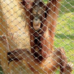 Alambre de acero inoxidable malla cuerda Gibbon recinto vallado de malla malla Zoo