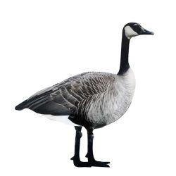 Folha de plástico corrugado impermeável PP Pato personalizados para caça chamariz de ganso Dianteiro
