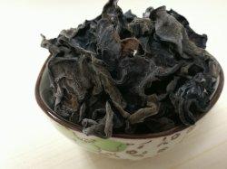 熱い販売の自然で黒い菌類