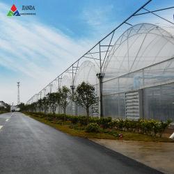 Jianda Agricultura/comercial en Invernadero de vidrio o plástico de policarbonato/Gases de Efecto/tienda cada vez mayor para el tomate y pepino/fresa/Roses