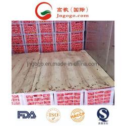 L'exportation de la Chine Fresh nombril orange (S M L)