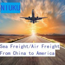 Il servizio di consegna espresso di logistica internazionale ha incluso il trasporto marittimo dalla Cina Verso l'America