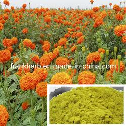 有機性Calendulaの粉