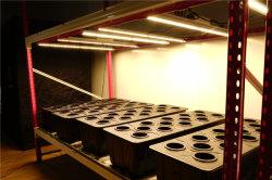 Geavanceerde leiden van de ZonneMacht kweken Lichten 500W