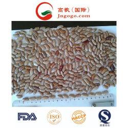 新しい穀物の良質ライトは腎臓豆を斑点を付けた