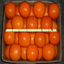 Neue Getreide-Großverkauf-Mandarine-frische erste Qualitätsnavel-Orange