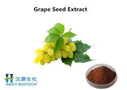 皮のためのブドウのシードのエキスの粉95% Proanthocyanidins