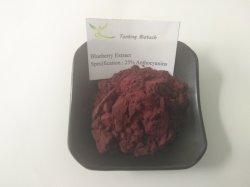 天然アントシアニンブルーベリー抽出粉体 100% ベストプライス
