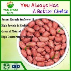 Luhua 11 rote Haut-Erdnuss-Kerne mit Qualität