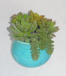 Mischfaux-saftige/künstliche Pflanze im bunten keramischen Pflanzer für Innendekoration