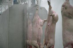 50-500/dia de suínos de abate de plantas de suínos matadouro matadouro para abate