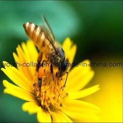 El polen superior de la abeja del girasol de la UE 100%Natural, ningunos antibióticos, ningunos pesticidas, ningunas bacterias patógenas, órganos internos de alimentación, prolonga vida