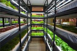 O OEM Auto regador de plástico do sistema de cultivo em hidroponia Nft vasos de plantas