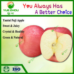 Yantai Fruit Fresh Fuji Apple 2018 중국 새 작물 저렴한 가격