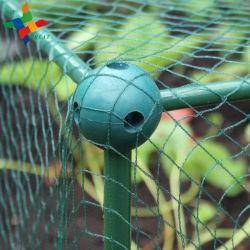Contrôle des oiseaux Knotless en plastique anti compensation
