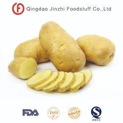 Des légumes frais Holland de la Patate douce