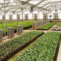 Polycarbonaat Sheet Green House Voor Vegetable Commercial Aluminium Frame