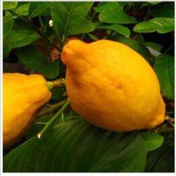 無色か浅い黄色の液体の高品質100%の自然で最もよい価格のManuafacturerのリモネンの芳香オイルの食糧味ベースオイルの精油