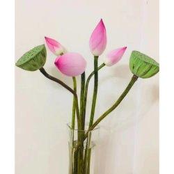 Remise de Nice Fleurs fraîches coupées des plantes ornementales de fleur de lotus Fleurs coupées fraîches pour la décoration