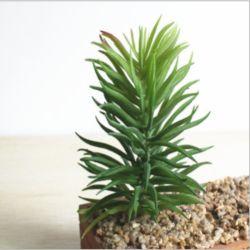 Pianta succulente artificiale del PVC della decorazione di falsificazione di plastica esterna dell'interno del Faux