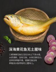 Poissons congelés courbines jaunes Corvina Fruits de mer frais IVP/IWP