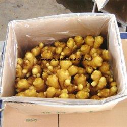高品質の中国の黄色い新鮮な野菜の新しいショウガによって乾燥されるショウガ
