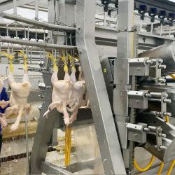 스테인리스 강 치킨 abattoir/치킨 페더 플존스 머신 치킨 머리 및 목 페더 제거 기계