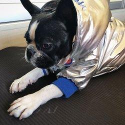Design elegante Blusa com capuz de cão de estimação casaco quente usar roupas de inverno