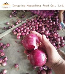 Qualitätsfrisches Zwiebelen-Gemüse-neues Getreide für Großhandels/Onion