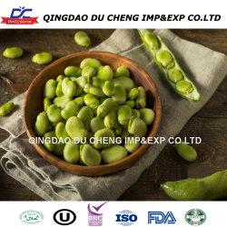 IQF gefrorene Saubohnen gefrorene Fava Bohnen -- Hochwertig