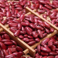 Carne fresca de Qualidade Premium de cultura feijão vermelho escuro